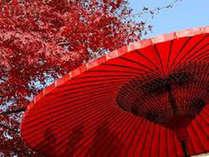 【紅葉の名所☆瑞宝寺公園】2500本の楓の紅葉が見事!当館から徒歩3分。11月には野点の催しも。