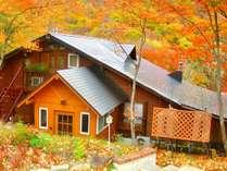 一面の紅葉に囲まれる秋のバディです