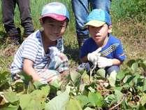 【家族 自然体験】農体験 山里で無農薬の野菜を作ろう 「じゃがいもの植え付けと生きもの観察」