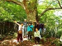 【期間限定 自然体験】12月5日限定!森からの恵みメイプルの森とトチノキ大木散策プラン