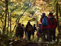 【自然体験】紅葉の山トレッキングプラン