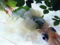 夏の主役☆朝とれ白イカ★甘くて柔らか~生姜とわさび醤油いろいろで。