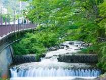 藤木川の清流を眺めながら。