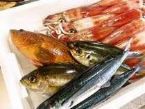 夏の仕入れ 神経〆アコウ・イサキ・今朝獲れトビウオ・アジ・シロイカを刺身、寿司に調理します。→→→