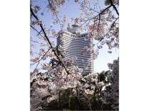 桜 ガーデンタワー