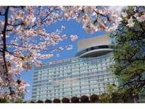 【ザ・メイン】春