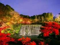 【日本庭園】秋