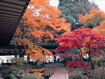 【松岡庭園・秋】秋は色鮮やかな紅葉が目を楽しませてくれます。
