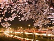 【お花見料理プラン】暖かな春の日差しに誘われて…
