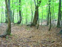 *【周辺】美しい緑を楽しむ…周辺散策もおすすめです。
