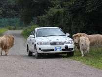 土湯温泉から車で約15分!世界に珍獣に会える「野生の王国」東北サファリパーク