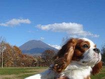 ●ペットプラン●愛犬も一緒にリゾートステイ♪