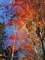 絶景の紅葉シーズン