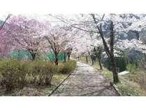 季節【スプリングフェア】桜を見ながら入る絶景露天風呂のある宿
