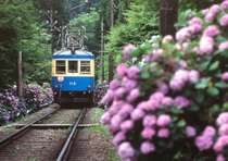 箱根登山電車沿線のあじさい