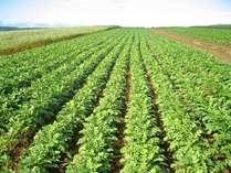 北海道『のぐち北湯沢ファーム』  北の大地の豊かな土壌に広がる畑で育つ野菜の数々