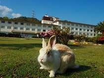 本館前の広場ではウサギ達が皆様をお待ちしております。