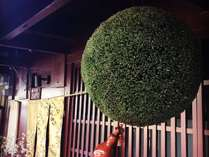 ほんまもん【西陣帯のれん】と【巨大な杉玉】が≪千松庵≫の目印です♪