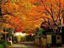 紅葉で人気となる秋シーズンのご予約はお早目に…