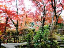 秋になると当館の雑木林の庭は赤や黄色に色づきます。美しい紅葉をぜひご覧ください。,岐阜県,夜がらす山荘 長多喜