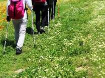 自然溢れる苗場山を登山・トレッキングで楽しむ!