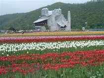 上湧別のチューリップ公園の見頃は5月初旬から6月初旬。ホテルから車で30分