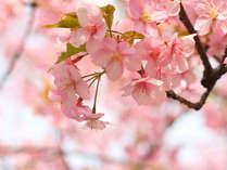 【お花見】花見の名所「白石城」まで約5分!桜咲く春旅プラン