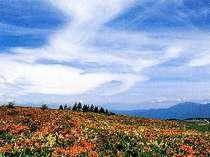 レンゲツツジ(6月中旬)とコバイケイソウの饗宴:車山肩方面ハイキングコース徒歩60分