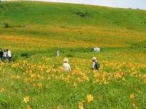 7月、霧ヶ峰高原はニッコウキスゲのお花畑になる:車山ハイキングコース徒歩40分