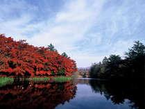 当館より車20分 旧軽井沢 雲場池 水面に映し出される景色がとても綺麗なオススメスポット。