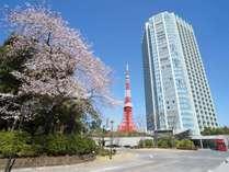 桜の季節には芝公園エリアに桜が満開になります。