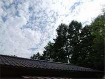 (ハルニレ1)真夏の外観