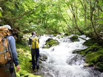 *【沢歩き】八甲田の山中には小さな沢がたくさんあります。秘境に涼みに行きませんか。