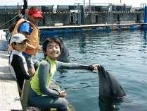 イルカに触ったり、合図を出したり、食事をあげたりしてイルカと仲良しに♪