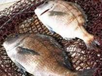 ◆ビジネス 釣りに最適!温泉満喫! 素泊まりレイトイン&アーリーアウトでお得なプラン