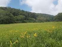 カヤノ平の湿原(一面に咲くニッコウキスゲ)