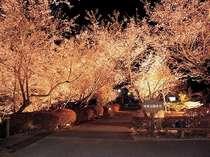 冬桜の宿 神泉