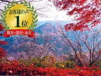 【城峯公園の冬桜・紅葉】当館から車で3分の城峯公園で冬桜と紅葉が同時に観賞できます