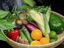 【料理】日田市の美しい水と特有の寒暖差で育ったお野菜は小量多品目 新鮮で安心、当館食事のメインです