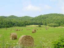 牧草ロール。穂の部分を刈り取った後の麦わらを丸めて作ったもので、牛の寝床に敷かれます。