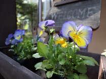 季節の花々がペンションを彩ります