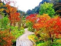 11月紅葉が見られる始める「合歓のはな」