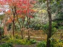 11月8日現在。今年は紅葉が進んで早まりそう(露天から瀬音に野鳥の音の風景やセラピーの森になごみます)