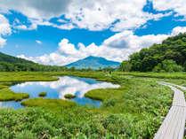 **「はるかな尾瀬、遠い空」で有名な尾瀬。 爽やかな高層湿原のご散策をぜひお楽しみください!