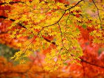 ♪紅葉満喫♪御岳山で懐かしの味覚♪四季折々会席料理とまろやか風呂を堪能![1泊2食付]
