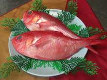 今が旬の鮮度抜群金目鯛お刺身、煮魚等