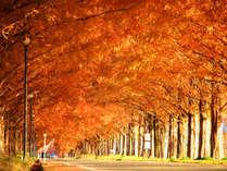 人気の紅葉スポット★メタセコイア並木★色鮮やかな500本もの紅葉並木に魅了されます。SNS映えにも◎