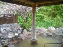 女性露天風呂。桜の咲く時期にはこんな風景の中で