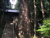 当館から徒歩5分、白馬のパワーを感じるスポット「諏訪神社」の千年杉
