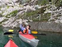 赤谷湖 お花見カヌーは4月下旬が見ごろの予定